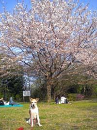 春5.jpg