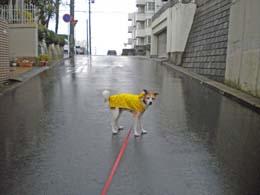 雨の日もも1.jpg