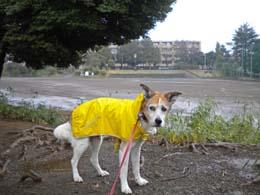雨の日もも2.jpg