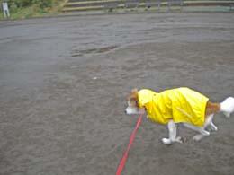 雨の日もも4.jpg