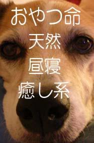 フェイスブック6.jpg