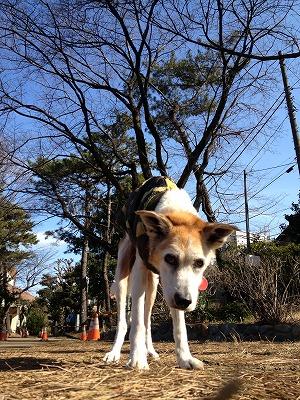 篠原台公園.jpg